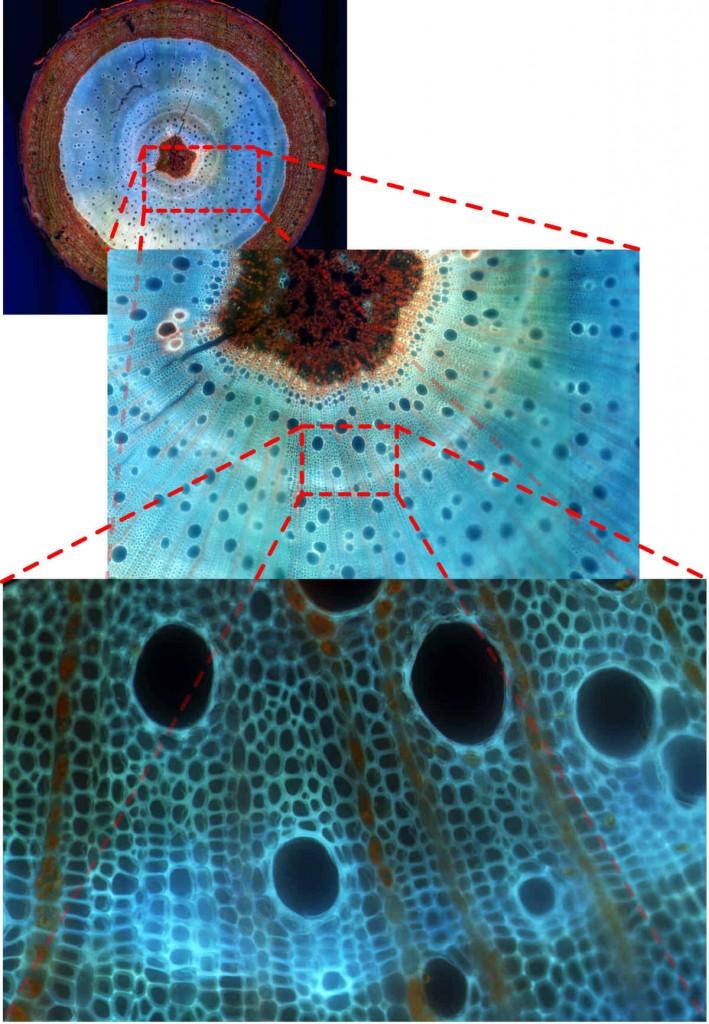 les possibilités du nanozoomer